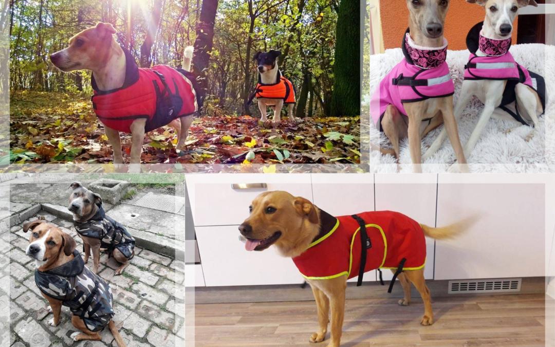 Ako vybrať oblečenie pre psíka? Do dažďa alebo na zimu.